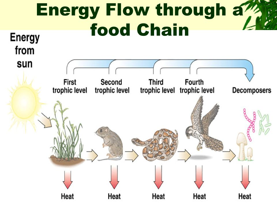 Nutritional Relationships  Involves the transfer of nutrients from one organism to another within an ecosystem.  In terms of nutrition, organisms ar