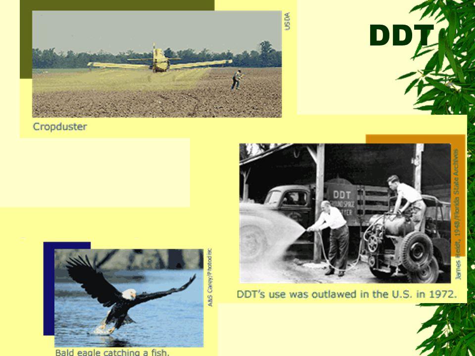 DDT in Food Webs