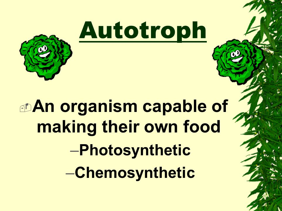 B. ALL living organisms must carry out ALL 8 life functions Nutrition Transport Respiration Excretion Synthesis Growth Regulation Reproduction