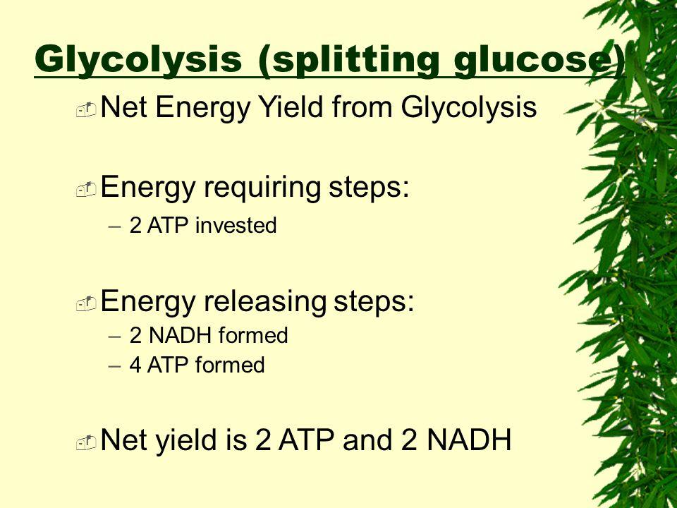 Glucose (C6H12O6) 2 pyruvic acid 2 ATP 2 PGAL (C3H5O3) Glycolysis (splitting glucose) +4 ATP Net Gain:???