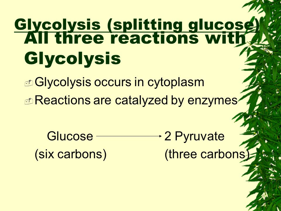 Glycolysis (splitting glucose)  Net Energy Yield from Glycolysis  Energy requiring steps: –2 ATP invested  Energy releasing steps: –2 NADH formed –