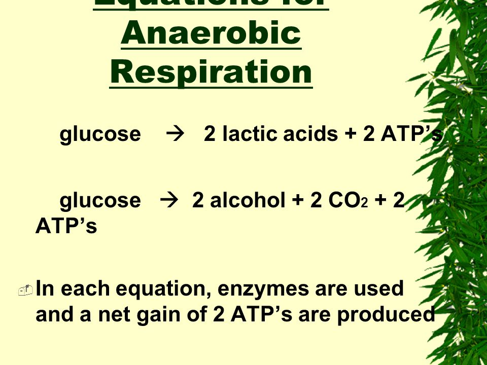 Aerobic Respiration Glucose + O 2  H 2 O + CO 2 + 36 ATP's  Again, enzymes are used and a net of 36 ATP's are produced Equations for Anaerobic Respi