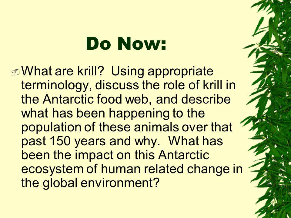 Krill!