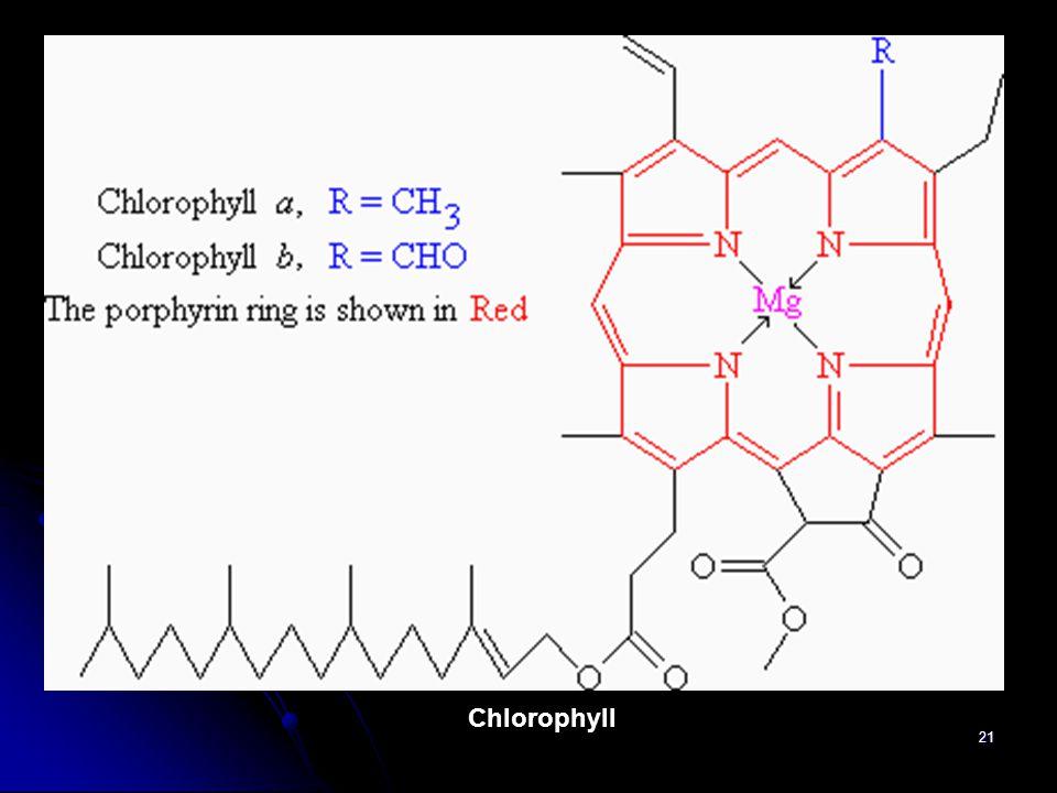 21 Chlorophyll