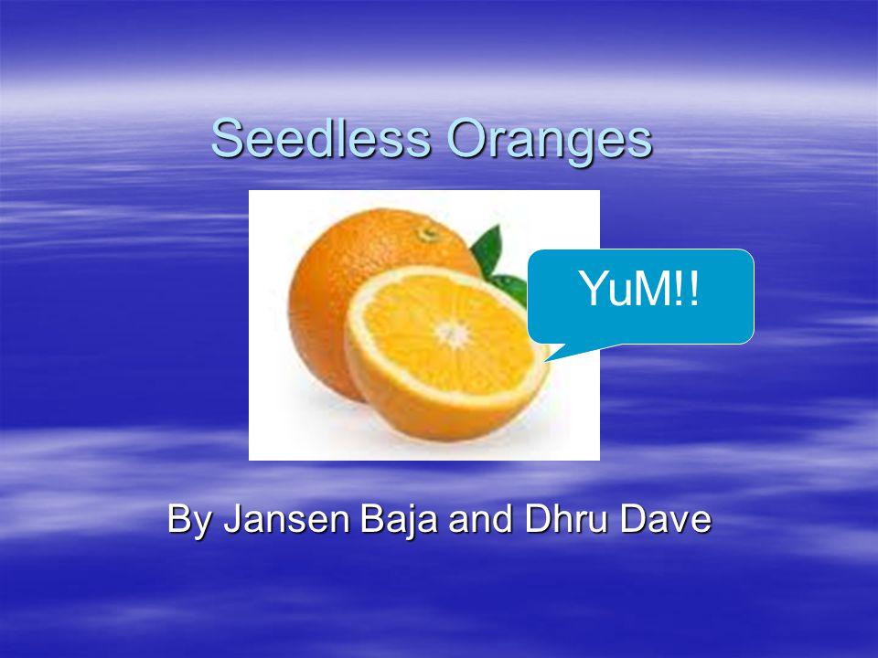 Seedless Oranges By Jansen Baja and Dhru Dave YuM!!