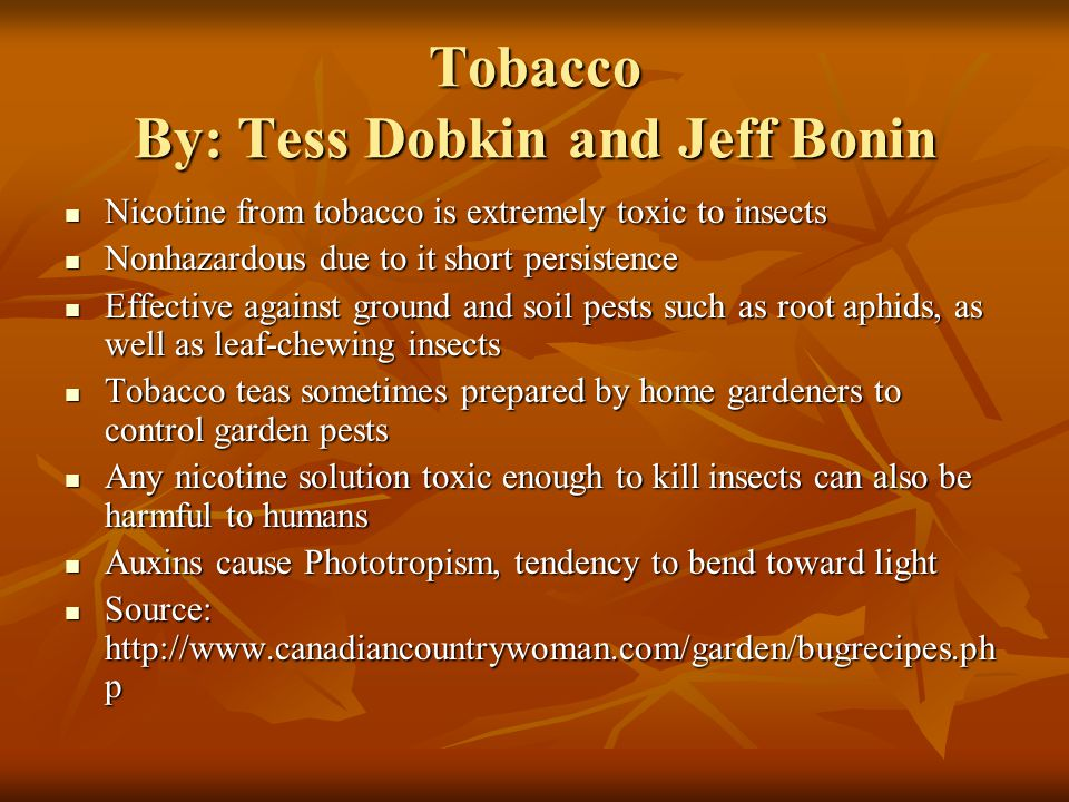 Tobacco By: Tess Dobkin and Jeff Bonin Nicotine from tobacco is extremely toxic to insects Nicotine from tobacco is extremely toxic to insects Nonhazardous due to it short persistence Nonhazardous due to it short persistence Effective against ground and soil pests such as root aphids, as well as leaf-chewing insects Effective against ground and soil pests such as root aphids, as well as leaf-chewing insects Tobacco teas sometimes prepared by home gardeners to control garden pests Tobacco teas sometimes prepared by home gardeners to control garden pests Any nicotine solution toxic enough to kill insects can also be harmful to humans Any nicotine solution toxic enough to kill insects can also be harmful to humans Auxins cause Phototropism, tendency to bend toward light Auxins cause Phototropism, tendency to bend toward light Source: http://www.canadiancountrywoman.com/garden/bugrecipes.ph p Source: http://www.canadiancountrywoman.com/garden/bugrecipes.ph p