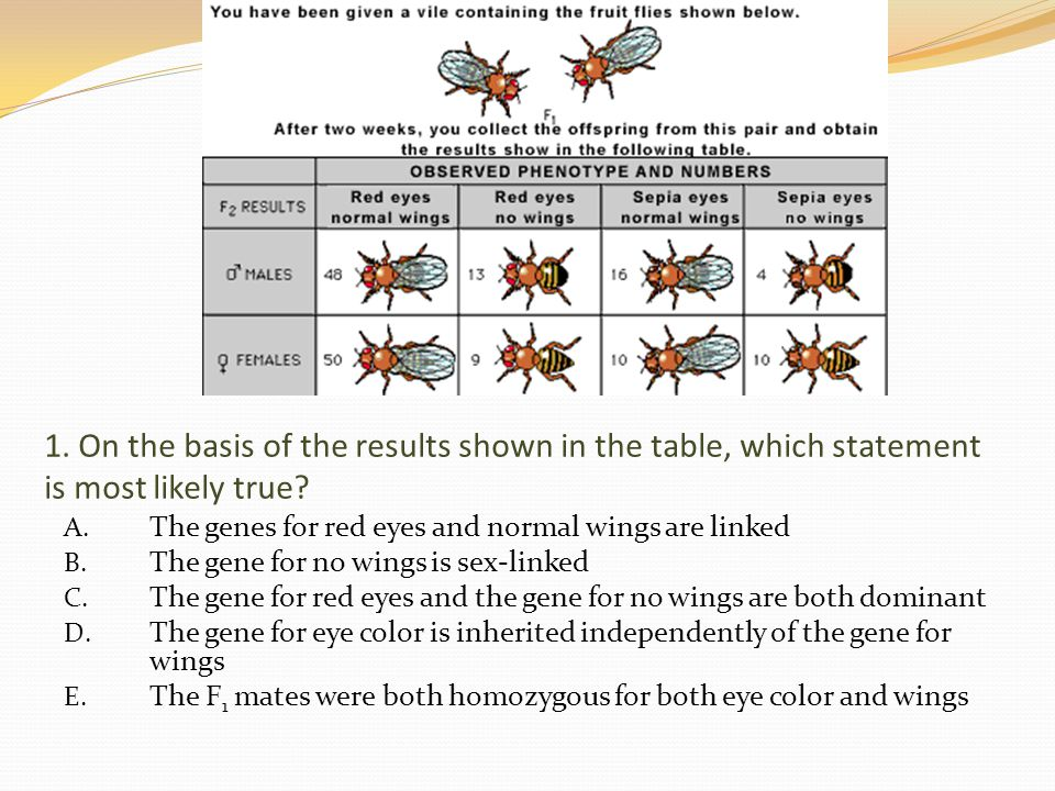 1. On the basis of the results shown in the table, which statement is most likely true? A. The genes for red eyes and normal wings are linked B. The g