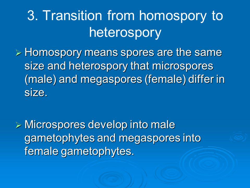 3. Transition from homospory to heterospory  Homospory means spores are the same size and heterospory that microspores (male) and megaspores (female)
