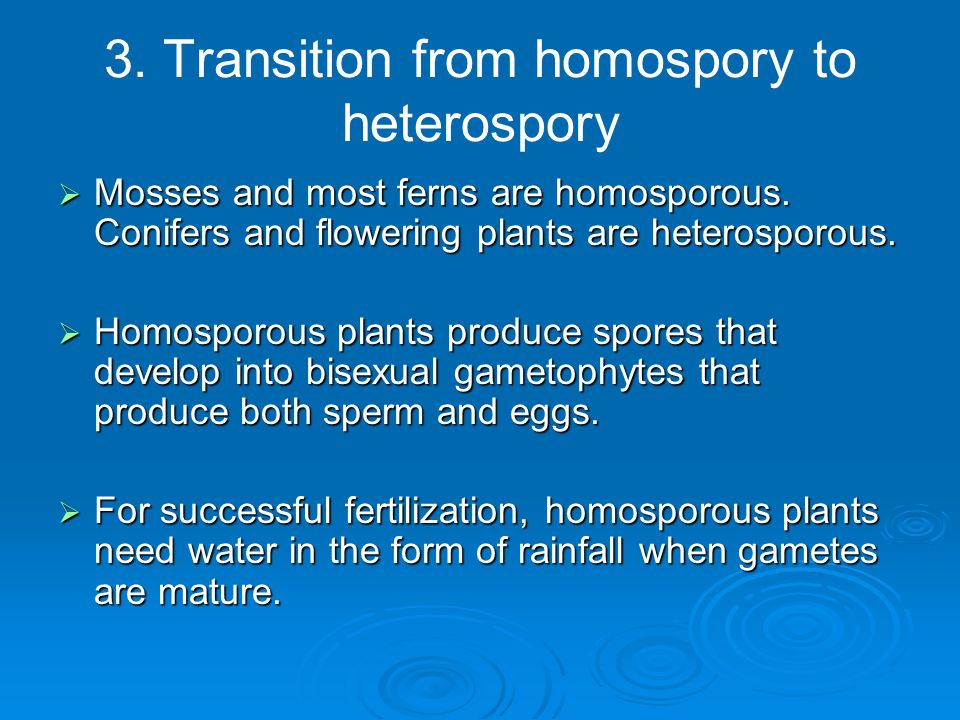 3. Transition from homospory to heterospory  Mosses and most ferns are homosporous. Conifers and flowering plants are heterosporous.  Homosporous pl