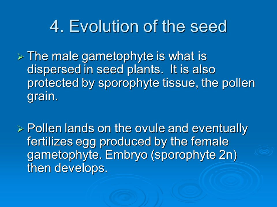 4. Evolution of the seed  The male gametophyte is what is dispersed in seed plants. It is also protected by sporophyte tissue, the pollen grain.  Po