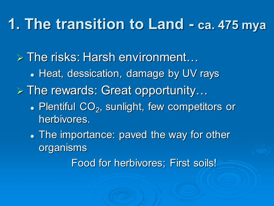  The risks: Harsh environment… Heat, dessication, damage by UV rays Heat, dessication, damage by UV rays  The rewards: Great opportunity… Plentiful