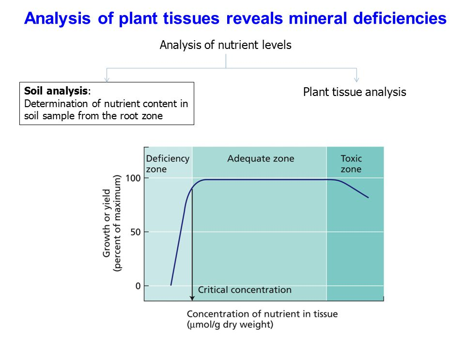 Analysis of plant tissues reveals mineral deficiencies Analysis of nutrient levels Soil analysis: Determination of nutrient content in soil sample from the root zone Plant tissue analysis