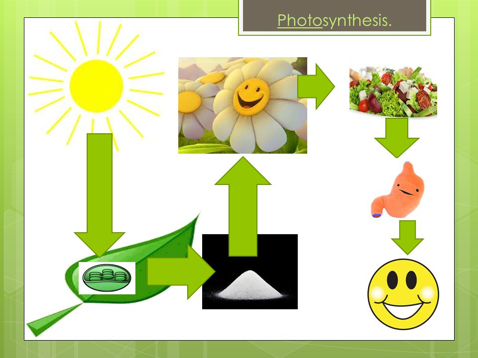Photosynthesis.