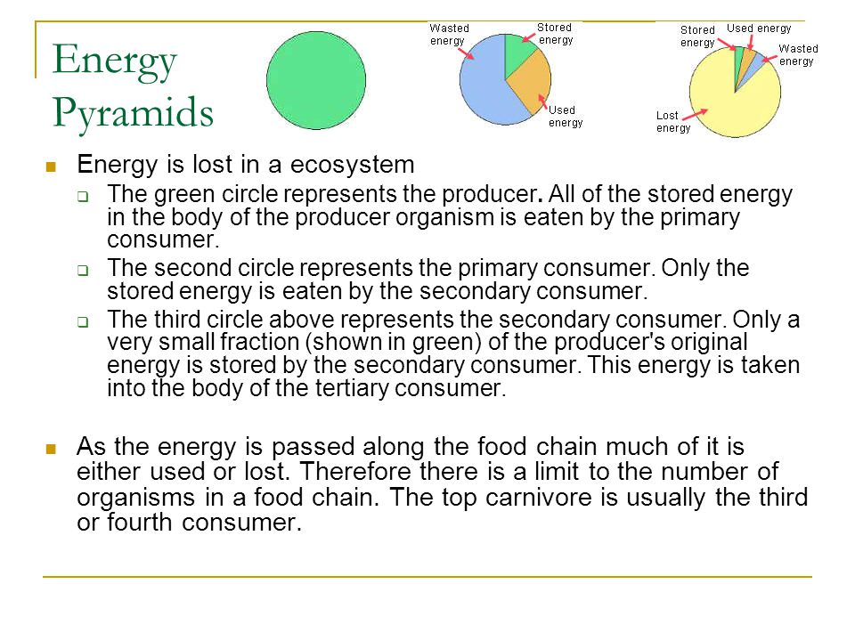 Energy Pyramids Energy is lost in a ecosystem  The green circle represents the producer. All of the stored energy in the body of the producer organis