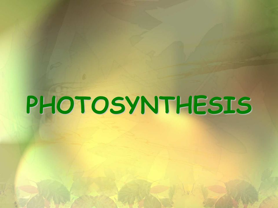 22 Parts of Photosynthesis