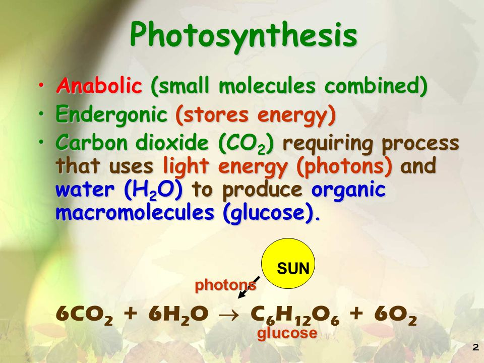 2 Photosynthesis Anabolic (small molecules combined)Anabolic (small molecules combined) Endergonic (stores energy)Endergonic (stores energy) Carbon dioxide (CO 2 ) requiring process that uses light energy (photons) and water (H 2 O) to produce organic macromolecules (glucose).Carbon dioxide (CO 2 ) requiring process that uses light energy (photons) and water (H 2 O) to produce organic macromolecules (glucose).