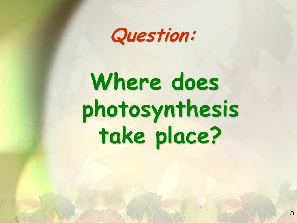 3 Question: Where does photosynthesis take place