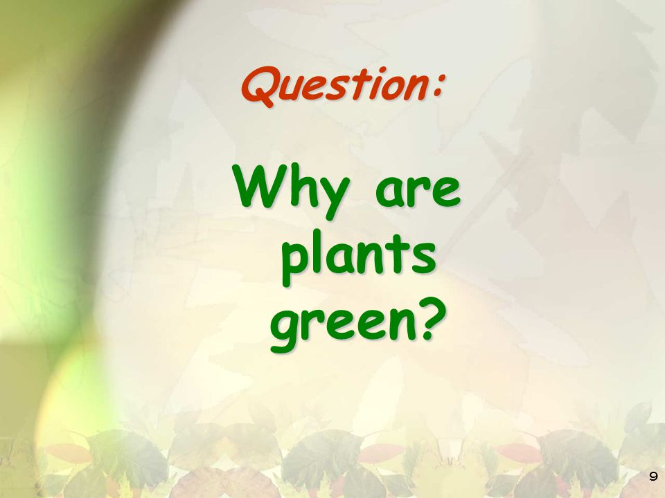 9 Question: Why are plants green