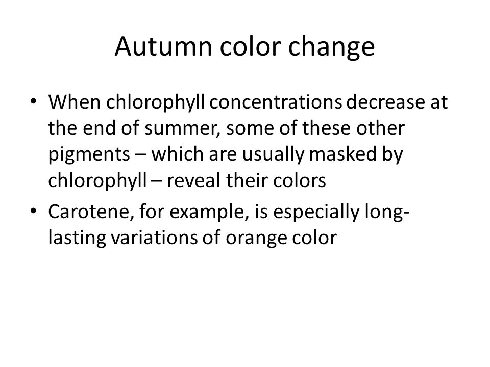 Autumn color change When chlorophyll concentrations decrease at the end of summer, some of these other pigments – which are usually masked by chlorophyll – reveal their colors Carotene, for example, is especially long- lasting variations of orange color