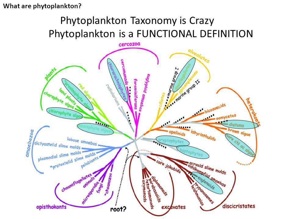 What are phytoplankton? DiatomsCoccolithophores Dinoflagellates