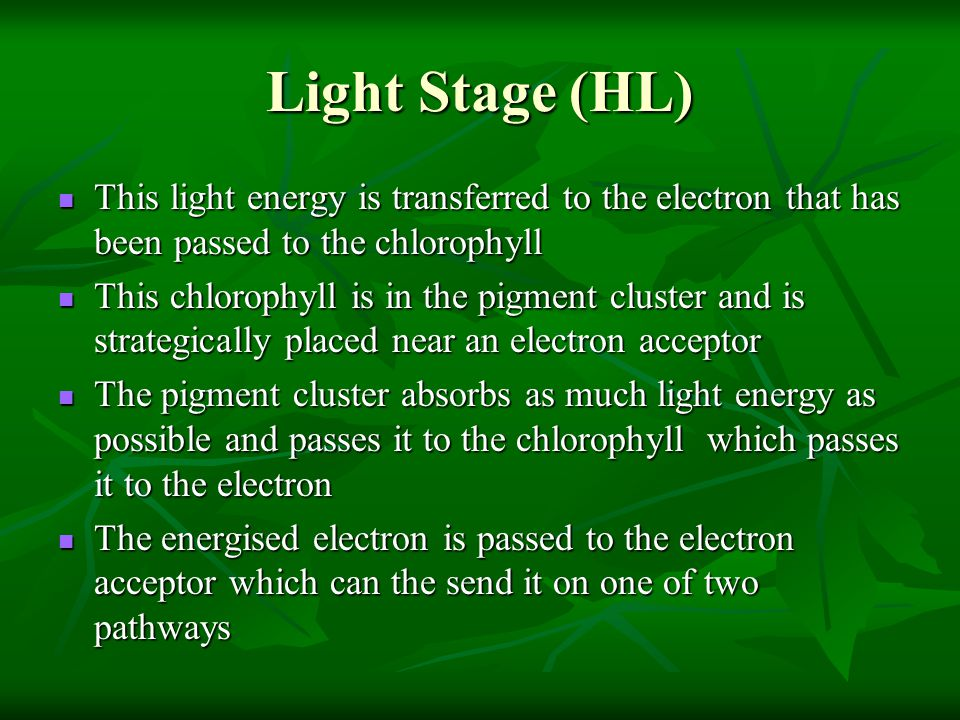 Light Stage (HL) This light energy is transferred to the electron that has been passed to the chlorophyll This light energy is transferred to the electron that has been passed to the chlorophyll This chlorophyll is in the pigment cluster and is strategically placed near an electron acceptor This chlorophyll is in the pigment cluster and is strategically placed near an electron acceptor The pigment cluster absorbs as much light energy as possible and passes it to the chlorophyll which passes it to the electron The pigment cluster absorbs as much light energy as possible and passes it to the chlorophyll which passes it to the electron The energised electron is passed to the electron acceptor which can the send it on one of two pathways The energised electron is passed to the electron acceptor which can the send it on one of two pathways