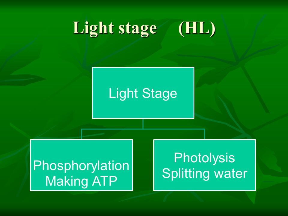 Light stage (HL)