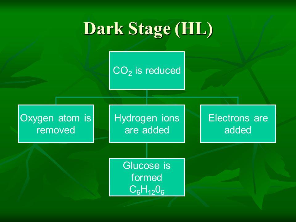 Dark Stage (HL)