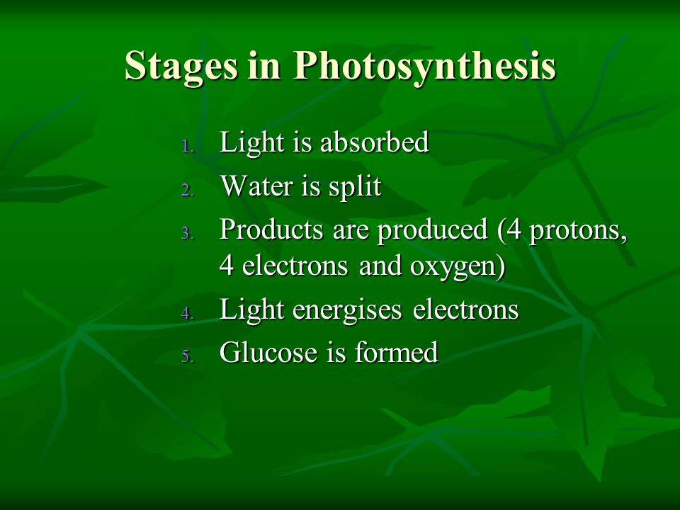 Stages in Photosynthesis 1.Light is absorbed 2. Water is split 3.