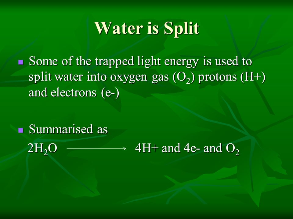 Water is Split Some of the trapped light energy is used to split water into oxygen gas (O 2 ) protons (H+) and electrons (e-) Some of the trapped light energy is used to split water into oxygen gas (O 2 ) protons (H+) and electrons (e-) Summarised as Summarised as 2H 2 O 4H+ and 4e- and O 2 2H 2 O 4H+ and 4e- and O 2