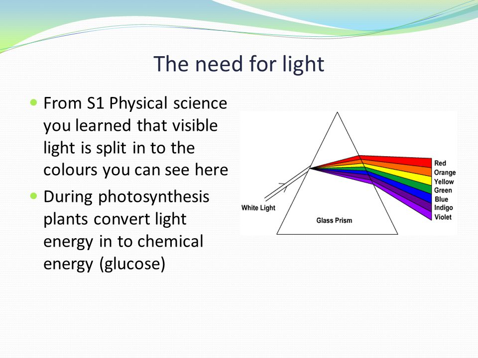 The need for light From S1 Physical science you learned that visible light is split in to the colours you can see here During photosynthesis plants convert light energy in to chemical energy (glucose)
