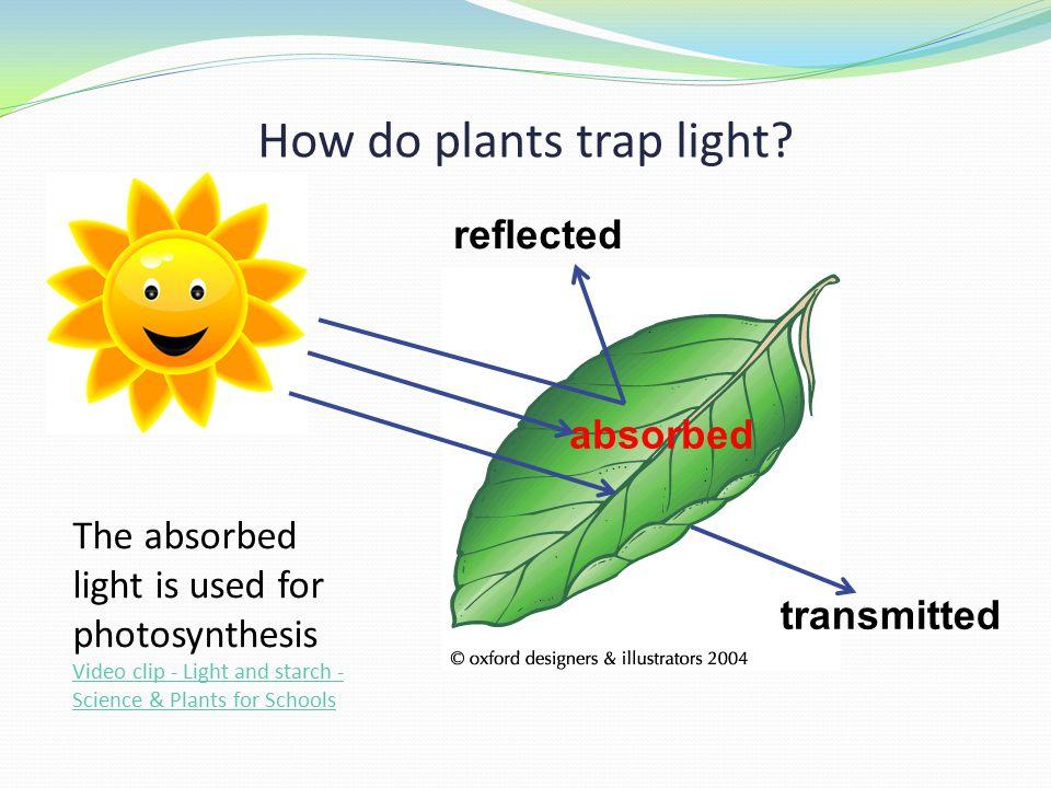 How do plants trap light.