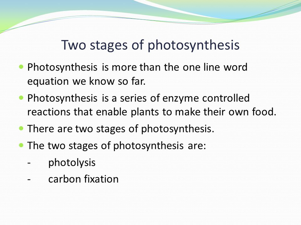 Two stages of photosynthesis Photosynthesis is more than the one line word equation we know so far.
