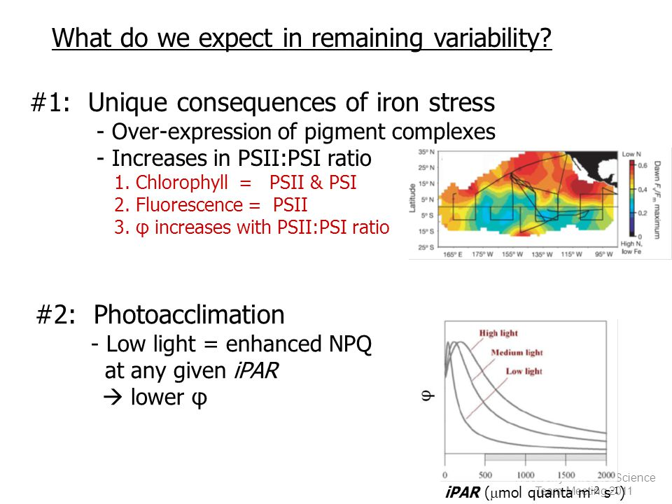 Westberry - MODIS Science Team Meeting 2011 iPAR (  mol quanta m -2 s -1 ) #1: Unique consequences of iron stress - Over-expression of pigment complexes - Increases in PSII:PSI ratio 1.