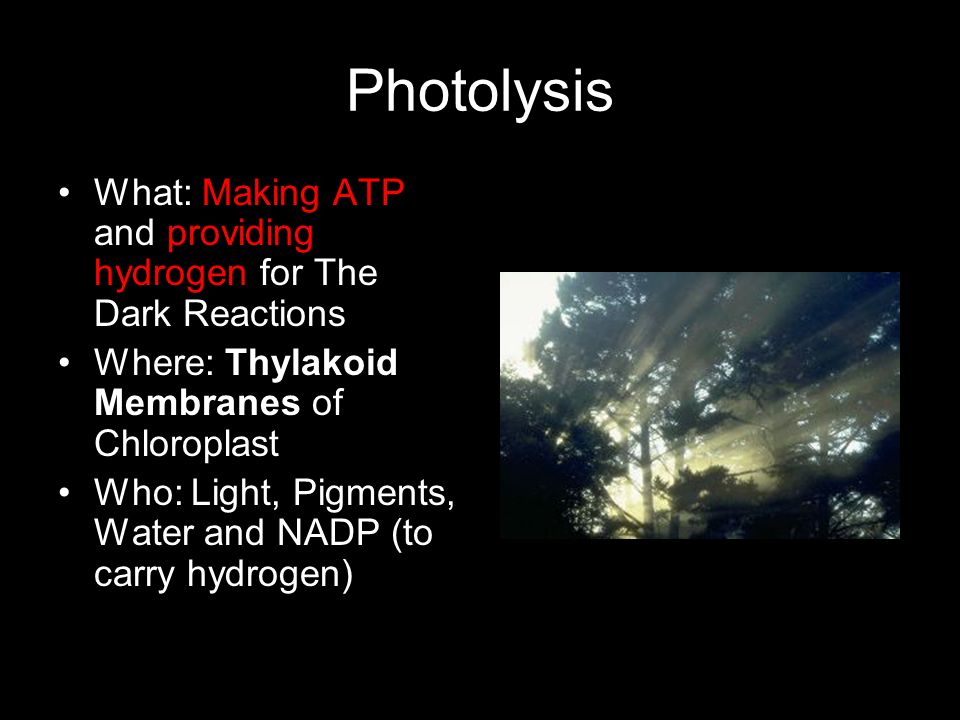 Photolysis What: Making ATP and providing hydrogen for The Dark Reactions Where: Thylakoid Membranes of Chloroplast Who: Light, Pigments, Water and NA