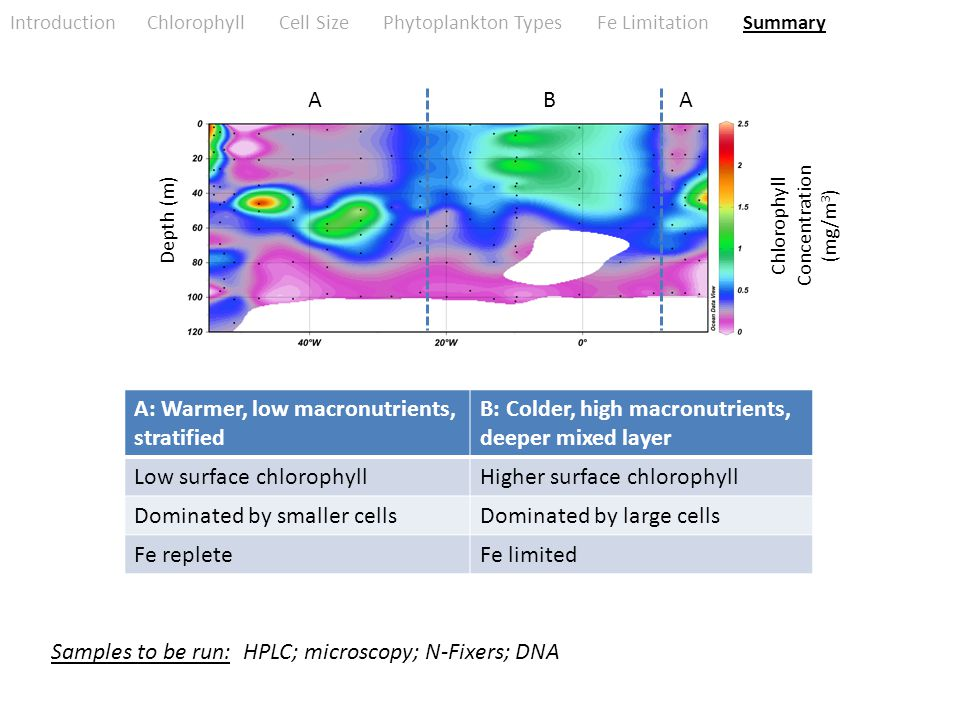 Introduction Chlorophyll Cell Size Phytoplankton Types Fe Limitation Summary Chlorophyll Concentration (mg/m 3 ) Depth (m) A: Warmer, low macronutrients, stratified B: Colder, high macronutrients, deeper mixed layer Low surface chlorophyllHigher surface chlorophyll Dominated by smaller cellsDominated by large cells Fe repleteFe limited ABA Samples to be run: HPLC; microscopy; N-Fixers; DNA