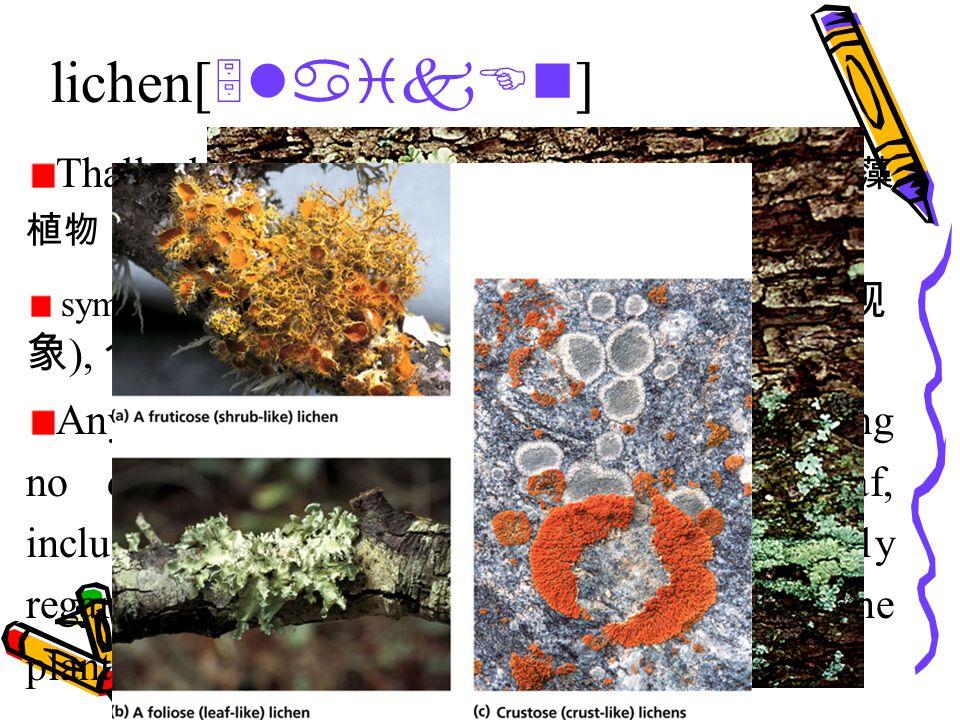 lichen[ 5laikEn ] Thallophyte [ 5WAlEfait ]n.