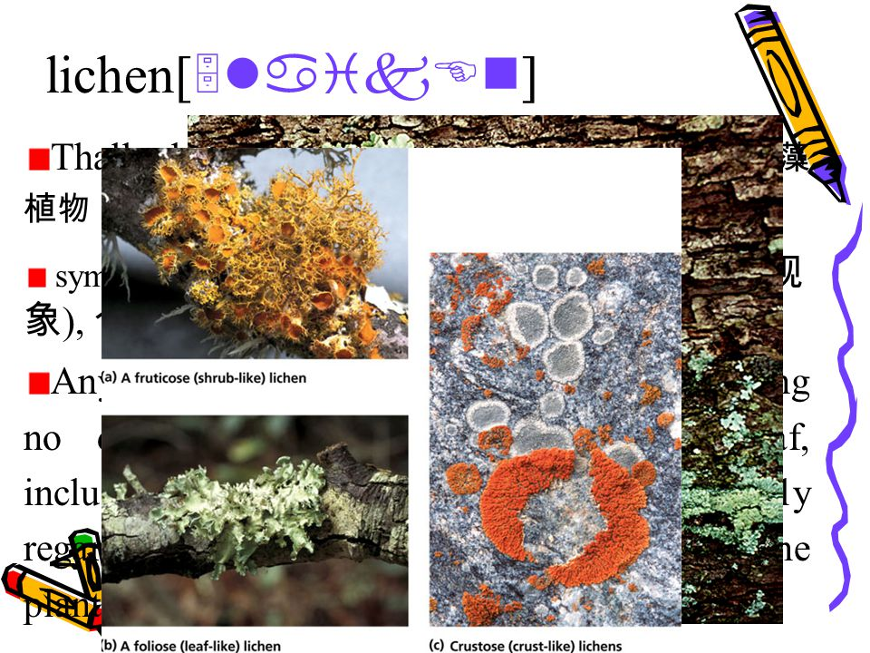 lichen[ 5laikEn ] Thallophyte [ 5WAlEfait ]n. 叶状植物, 菌藻 植物 symbiosis [ simbai5Eusis ]n.[ 生 ] 共生 ( 现 象 ), 合作 ( 或互利, 互依 ) 关系 Any of a group of plantlike