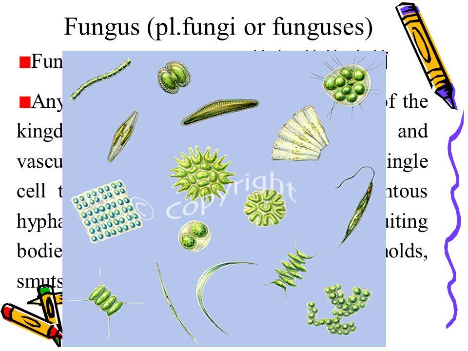 Fungus (pl.fungi or funguses) Fungus [ 5fQN^Es ]n.