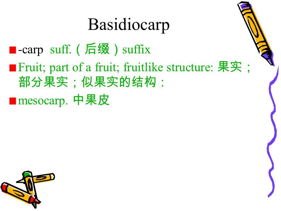 Basidiocarp -carp suff. (后缀) suffix Fruit; part of a fruit; fruitlike structure: 果实; 部分果实;似果实的结构: mesocarp. 中果皮