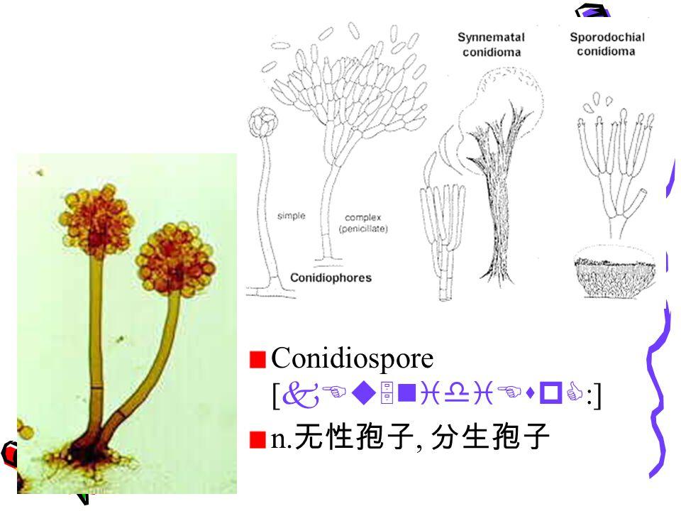 Conidiospore [ kEu5nidiEspC :] n. 无性孢子, 分生孢子