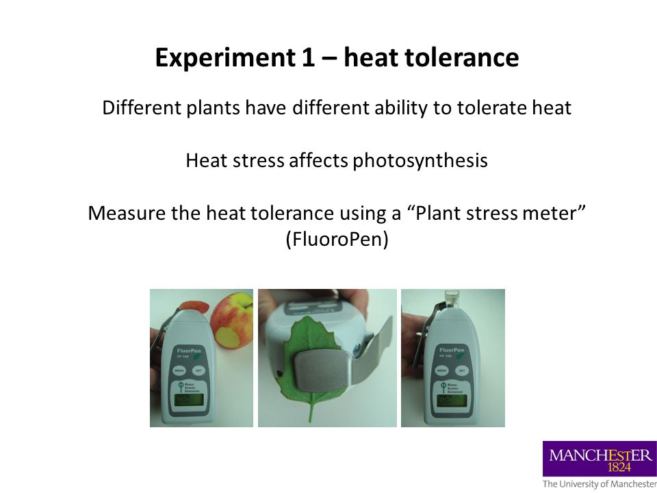 Experiment 1 – heat tolerance Different plants have different ability to tolerate heat Heat stress affects photosynthesis Measure the heat tolerance using a Plant stress meter (FluoroPen)