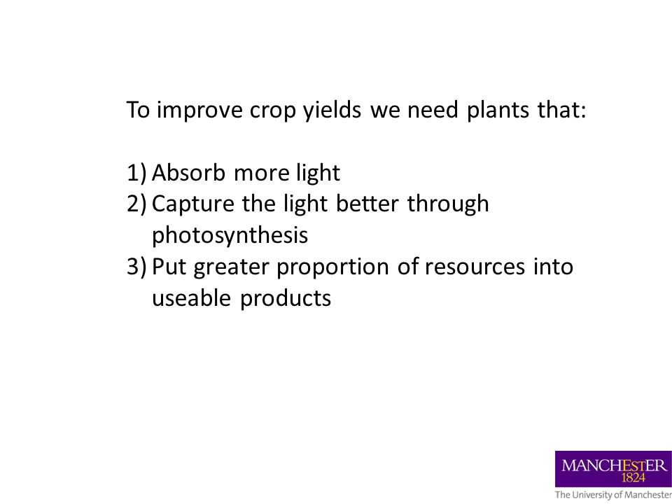 To improve crop yields we need plants that: 1)Absorb more light 2)Capture the light better through photosynthesis 3)Put greater proportion of resources into useable products