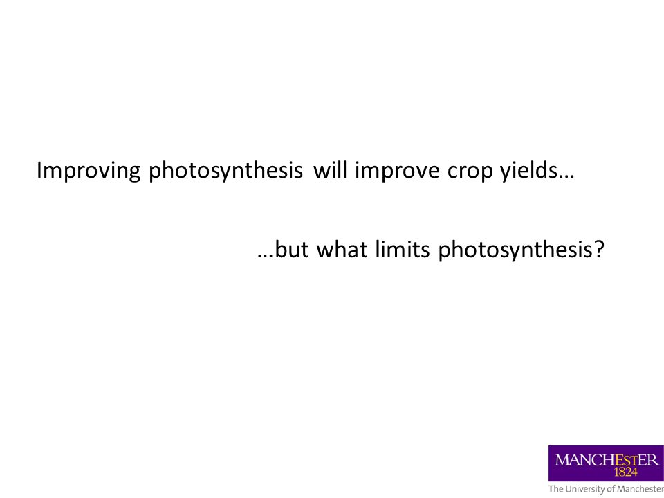 Improving photosynthesis will improve crop yields… …but what limits photosynthesis
