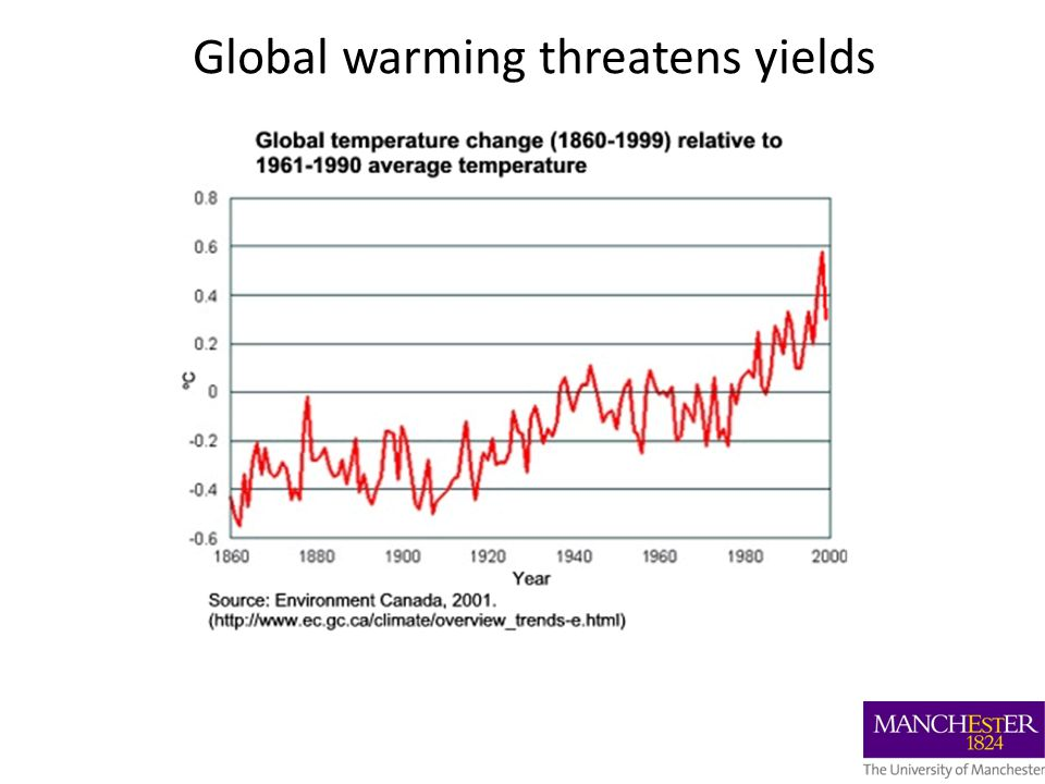 Global warming threatens yields