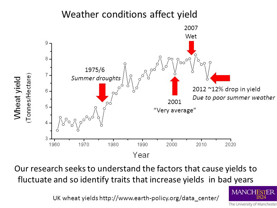 UK wheat yields http://www.earth-policy.org/data_center/ 2012 ~12% drop in yield Due to poor summer weather 1975/6 Summer droughts 2007 Wet 2001 Very average Weather conditions affect yield Our research seeks to understand the factors that cause yields to fluctuate and so identify traits that increase yields in bad years