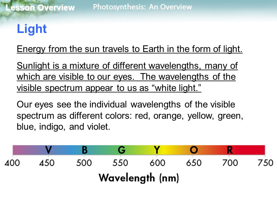 Lesson Overview Lesson Overview Photosynthesis: An Overview Light Energy from the sun travels to Earth in the form of light.