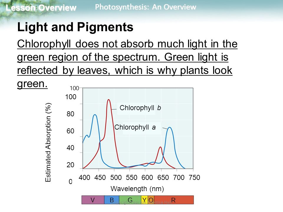 Lesson Overview Lesson Overview Photosynthesis: An Overview Pigments Plants also contain red and orange pigments such as carotene that absorb light in other regions of the spectrum.