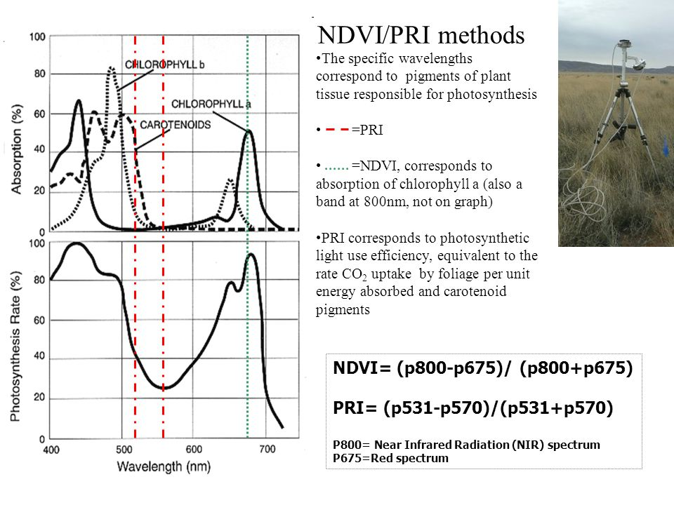 The specific wavelengths correspond to pigments of plant tissue responsible for photosynthesis =PRI =NDVI, corresponds to absorption of chlorophyll a (also a band at 800nm, not on graph) PRI corresponds to photosynthetic light use efficiency, equivalent to the rate CO 2 uptake by foliage per unit energy absorbed and carotenoid pigments NDVI/PRI methods NDVI= (p800-p675)/ (p800+p675) PRI= (p531-p570)/(p531+p570) P800= Near Infrared Radiation (NIR) spectrum P675=Red spectrum