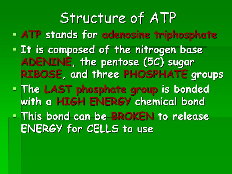Structure of ATP  ATP stands for adenosine triphosphate  It is composed of the nitrogen base ADENINE, the pentose (5C) sugar RIBOSE, and three PHOSPHATE groups  The LAST phosphate group is bonded with a HIGH ENERGY chemical bond  This bond can be BROKEN to release ENERGY for CELLS to use