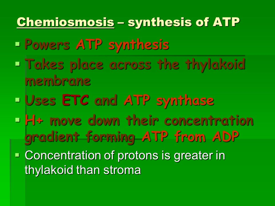 Chemiosmosis – synthesis of ATP  Powers ATP synthesis  Takes place across the thylakoid membrane  Uses ETC and ATP synthase  H+ move down their concentration gradient forming ATP from ADP  Concentration of protons is greater in thylakoid than stroma